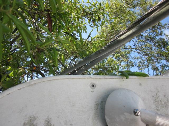 Electrical Hazard- Overhead power lines, East Naples, Fl.