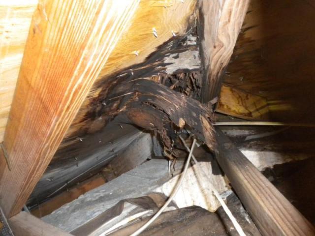 Roof leak, Lehigh Acres, Florida